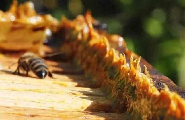 蜂蜜柚子水 酿蜂蜜酒 蜂蜜柚子糖的做法 蜂蜜祛痘法 柠檬蜂蜜茶孕妇可以喝吗