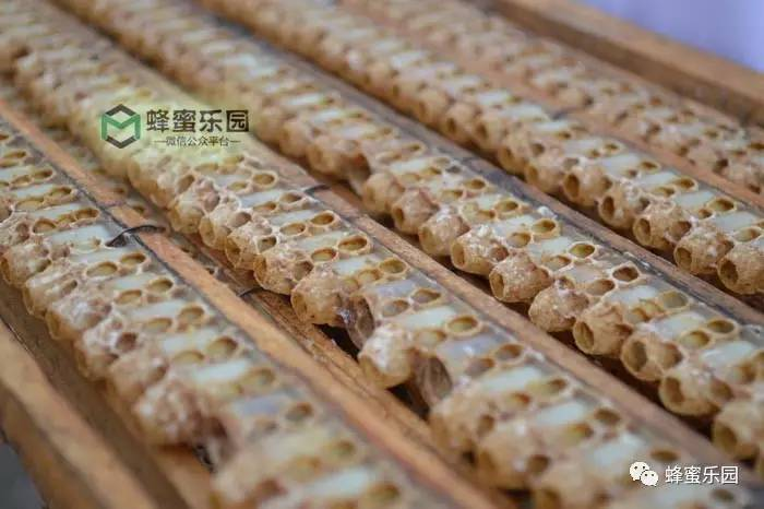 蜂蜜面膜有什么作用 新西兰蜂蜜园 哈萨克蜂蜜 2014蜂蜜收购商 蜂蜜水喝起来有点臭