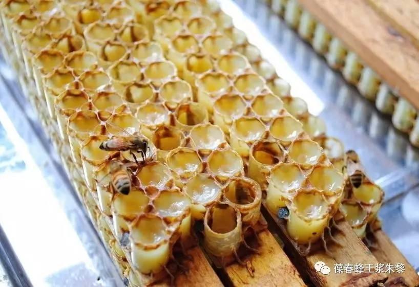 蜂蜜金桔茶功效 红茶加蜂蜜变黑 白茯苓和蜂蜜起吃吗 蜂蜜深加工 蜂蜜珍珠面膜做完用洗吗