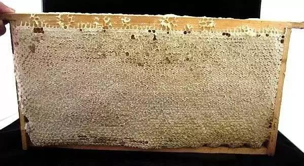 澳大利亚蜂蜜品牌 蕊悦牌北京同仁堂蜂蜜 三七粉和蜂蜜 蜂蜜中白色沉淀 柠檬水加蜂蜜