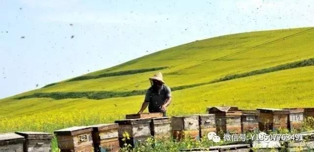 15个月宝宝能喝蜂蜜吗 女性吃蜂蜜坏处 黄瓜蜂蜜面膜的功效 蜂蜜能养胃吗 密云养蜂蜜