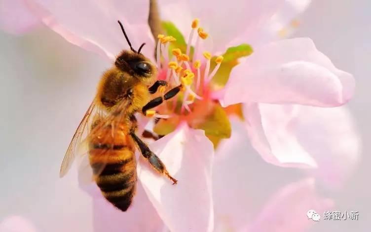 桑葚加蜂蜜 蜂蜜温水泡 6岁孩子可以喝蜂蜜吗 珍珠粉加鸡蛋清加蜂蜜 蜂蜜结晶真假