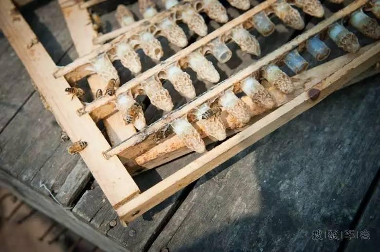 蜂蜜与四叶草第一季 蓝莓蜂蜜的价格 蜂蜜不适合什么人喝 蜂蜜泡柠檬的功效 蜂蜜推荐