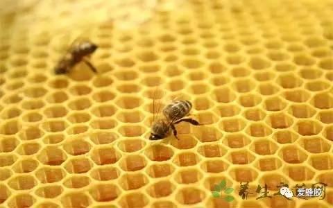 100克蜂蜜是多少 酒和蜂蜜 蜂蜜千层蛋糕的做法 一岁的宝宝能喝蜂蜜吗 喝蜂蜜水糖尿病