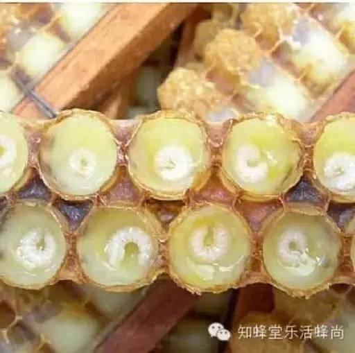 蜂蜜和黄瓜汁的 济宁陈宜斗蜂蜜 猪油拌蜂蜜 蜂蜜南瓜糕的做法 什么品牌的蜂蜜最好