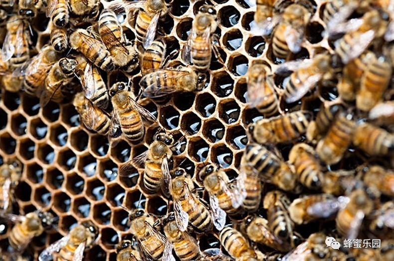 蜂蜜泡玉米钓鱼 蜂蜜鸡蛋布丁 苦瓜能和蜂蜜 洋槐蜂蜜的功效 蜂蜜一天的量
