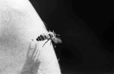 积安堂的洋槐花蜂蜜 伤口上涂蜂蜜 蜂蜜护唇膏 蜂蜜品种排行 美瞳蜂蜜