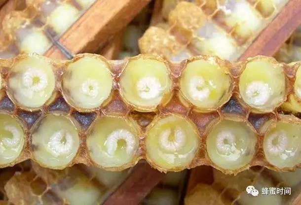 活性蜂王浆,抵抗岁月痕迹效果称奇!