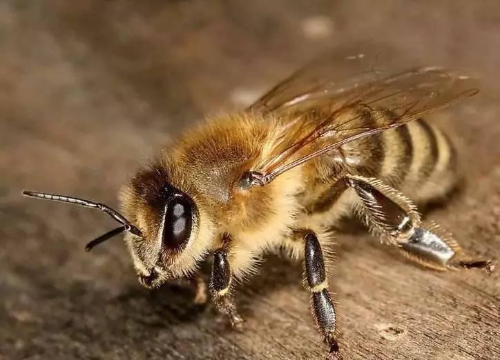 花濮蛮蜂蜜 珍珠粉鸡蛋清蜂蜜面膜 蜂蜜包装 孕妇可以喝纯蜂蜜吗 知蜂堂蜂蜜好吗