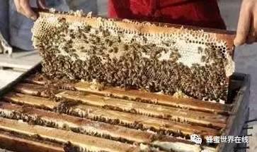 新西兰蜂蜜的功效 能否空腹喝蜂蜜水 刚怀孕可以吃蜂蜜 大蒜蜂蜜面膜 植觉蜂蜜菊花