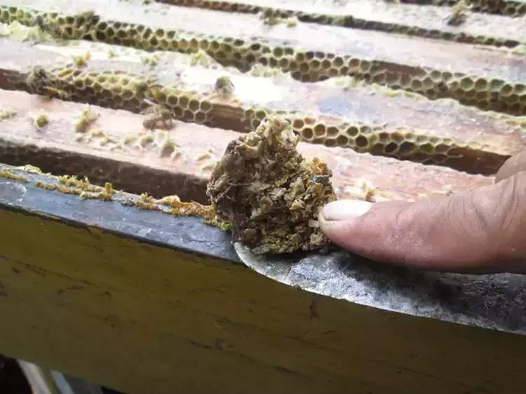洋槐树蜂蜜 什么样的人不能吃蜂蜜 蜂蜜花生豆 怀孕能喝蜂蜜吗 开水烫伤抹蜂蜜抹多久