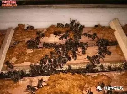 蜂蜜和羊奶 男生喝什么蜂蜜 喝蜂蜜水有助顺产吗 山楂蜂蜜醋 哪个季节的蜂蜜好