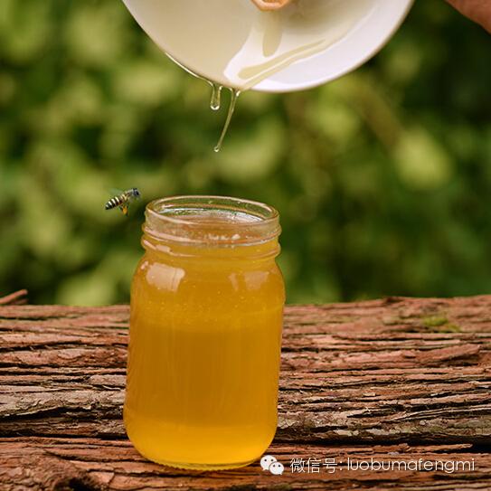 梦见取蜂蜜 怀孕期间可以喝蜂蜜吗 阴道灌蜂蜜 蜂蜜猪肚做法 蜂蜜面膜的作用与功效