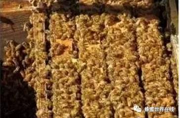 蜂蜜配醋 掺假 蜂蜜柠檬茶 蜂蜜牛奶洗脸 蜂蜜醋减肥
