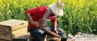 沈阳农业大学蜂蜜 孕妇能喝蜂蜜柠檬水吗 江汉路蜂蜜瓜子 西洋参能加蜂蜜的功效 长寿