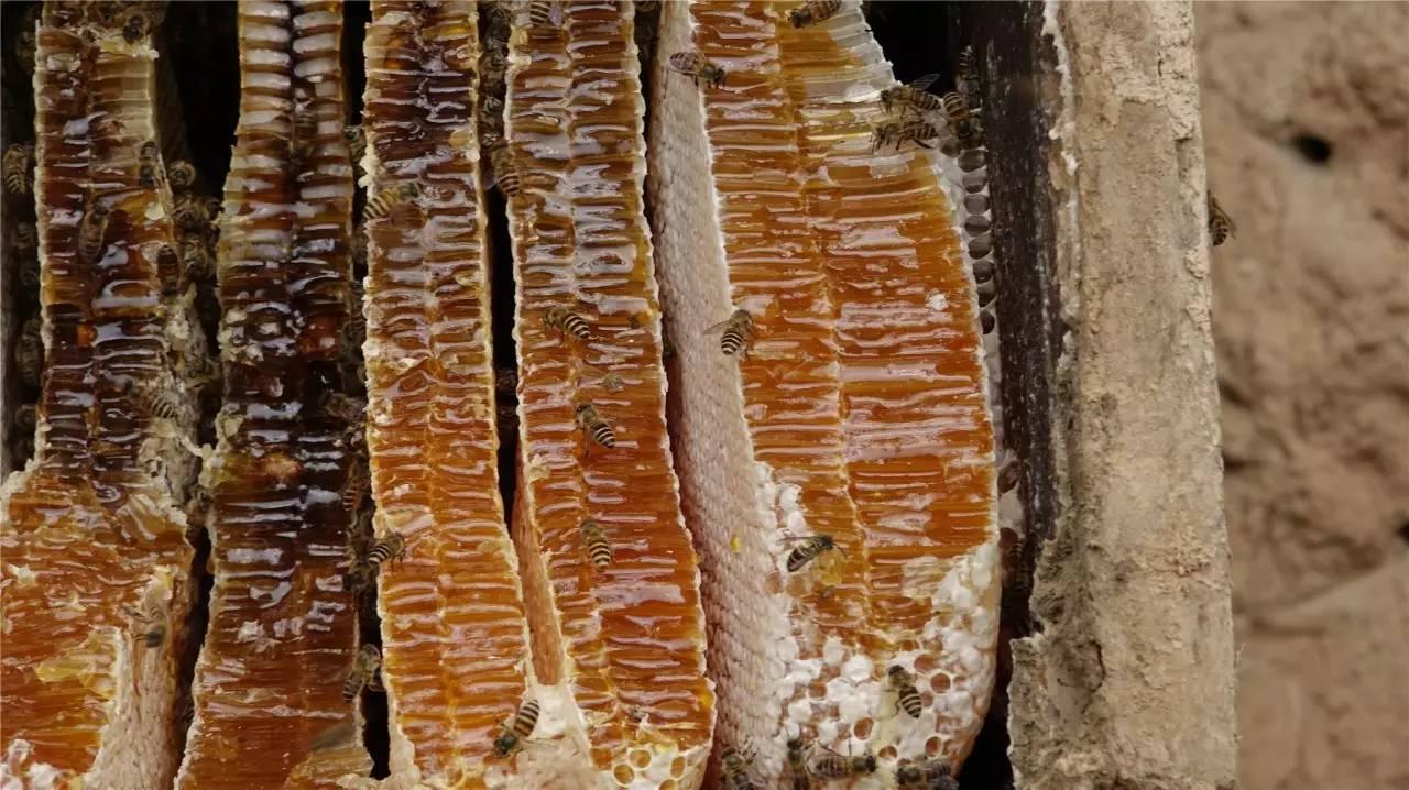 伊朗蜂蜜蜂巢 拉肚子蜂蜜丸 喉咙干喝蜂蜜红枣水可以吗 晚上吃柠檬蜂蜜水好吗 hauora麦卢卡蜂蜜没标UMF