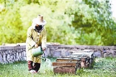 燕麦蜂蜜面膜功效 蜂蜡与蜂蜜 牛奶 蜂蜜泡佛手的做法 炖鸡放蜂蜜产妇可以吗