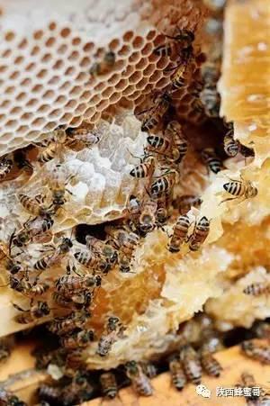 菊花蜂蜜柠檬 蜂蜜在强碱下 醋加蜂蜜功效与作用 怎么看蜂蜜好坏 土豆蜂蜜可以一起吃吗