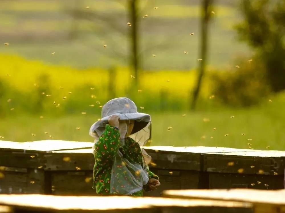 煮茶叶粥放蜂蜜好吗 苏州蜂蜜专卖店 蛋黄加蜂蜜对脸的好处 日企用中国蜂蜜冒充日本货 蜂蜜熬药