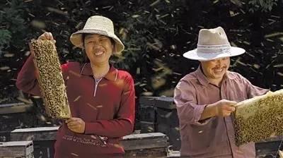 洛阳汪氏蜂蜜 vc可以和蜂蜜一起吃吗 蜂蜜泡沫 蜂蜜出口国际贸易 海带蜂蜜