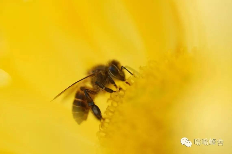 天喔蜂蜜柚子茶价格 养蜂的蜂蜜好吗 蜂蜜水助消化 蜜蜂与蜂蜜图片 长岁牌岩蜂蜜
