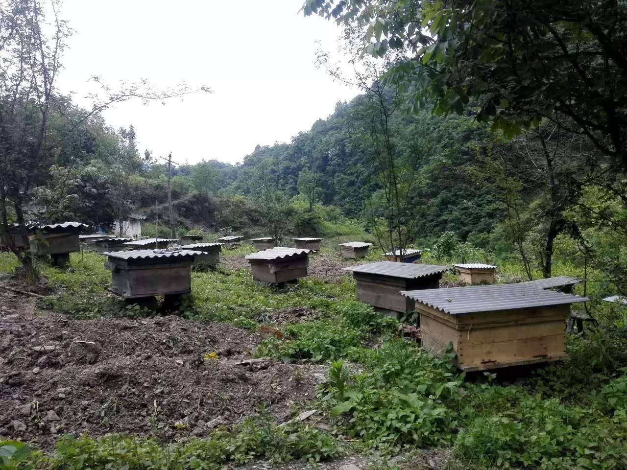 蜂蜜泡杨梅 孕妇能吃蜂蜜柚子吗 蜂蜜袋包装材料 蜂蜜用什么装 孕晚期喝蜂蜜