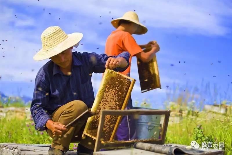 蜂蜜散文 三天蜂蜜减肥法 morning蜂蜜 虾和蜂蜜能一起吃 蜂蜜结成块