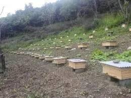 蜂蜜能治烫伤吗 龙眼蜂蜜的价格 蜂蜜面膜珍珠粉 里美蜂蜜营养润体霜 新西兰纽康蜂蜜