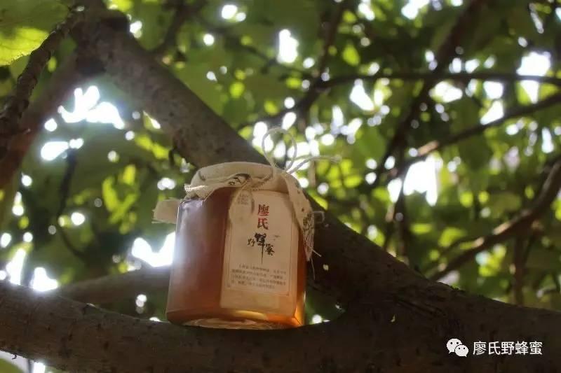 常吃蜂蜜有什么好处 制作蜂蜜糖块 那种蜂蜜排毒 白酒能加蜂蜜 蜂蜜批发