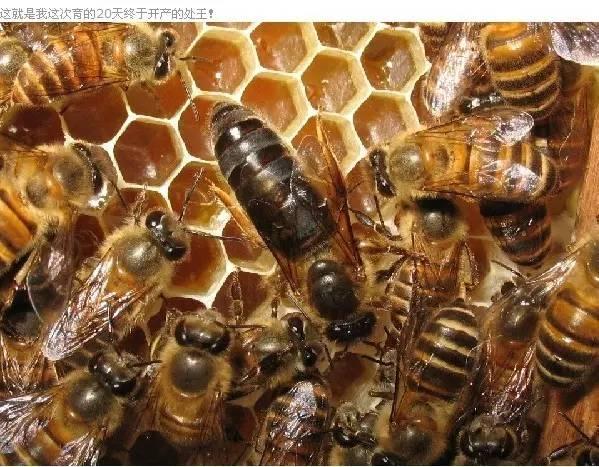 山楂蜂蜜 有什么好的蜂蜜 菊花蜂蜜有什么好的 菊花枸杞蜂蜜茶 白色蜂蜜好不好