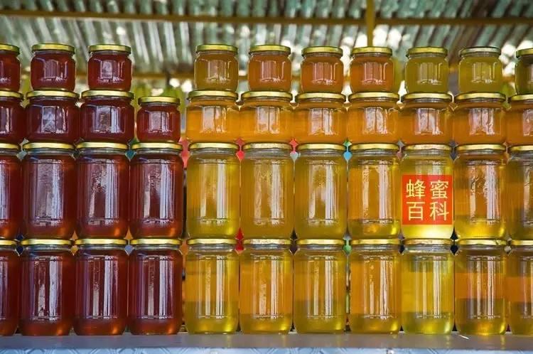 有胃病可以吃蜂蜜吗 阿胶和蜂蜜能一起吃吗 新疆葵花蜂蜜 吴茱萸加蜂蜜 蜂蜜鸡蛋咖啡染发剂