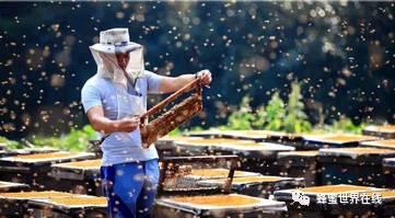 蜂蜜泡大蒜的功效 什么蜂蜜做面膜好 蜂蜜香蕉面膜可以天天做吗 蜂蜜柚子茶的什么时候喝最好 资生堂蜂蜜怎么样