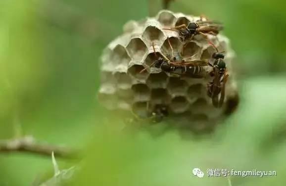 很稀的蜂蜜 喝了发酵的蜂蜜怎么办 绿豆蜂蜜面膜的功效 蜂蜜柚子茶什么人不能喝 烧烤蜂蜜水