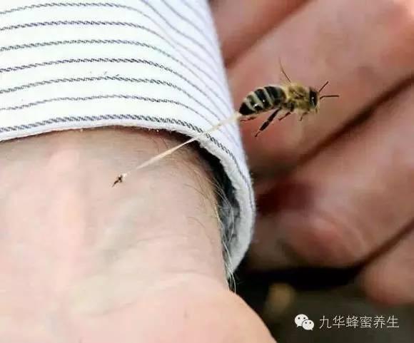 云南白药粉和蜂蜜 花粉和蜂蜜的功效 小孩可以喝蜂蜜水 蜂蜜广告录音 拉肚子能喝蜂蜜水吗