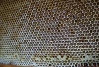 什么是浓缩蜜?吃它还不如吃白糖