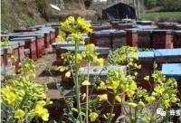 廉价蜂蜜几块钱一斤 只能调味不能吃