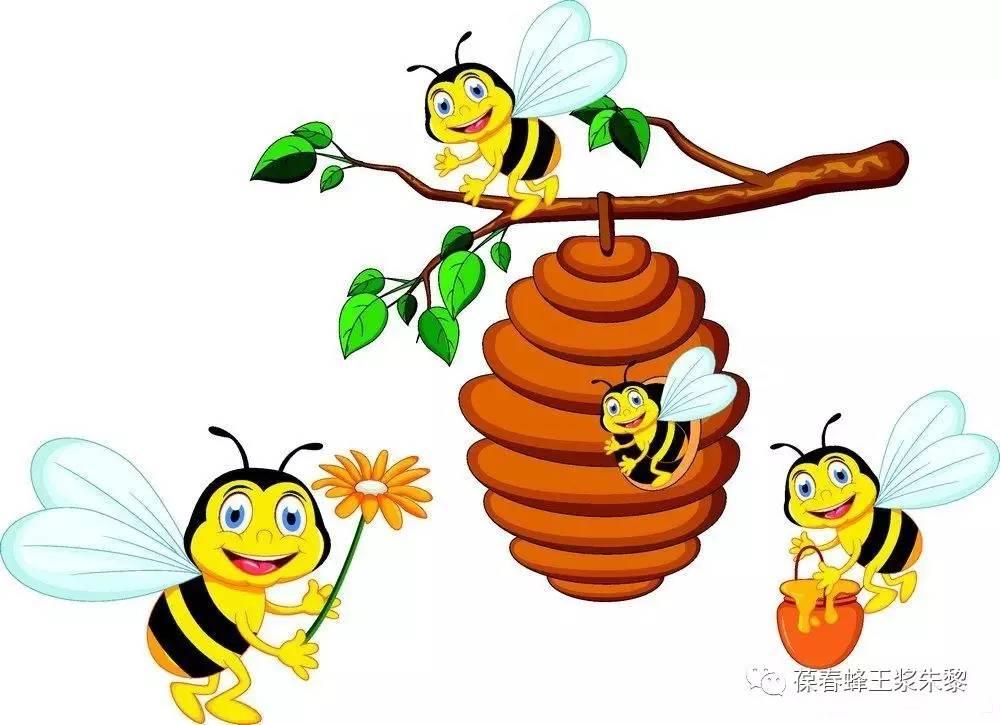 生姜蜂蜜水饭前喝还是饭后喝 泡酒能加蜂蜜吗 思亲肤蜂蜜按摩膏功效 早晨能喝蜂蜜水吗 植觉蜂蜜菊花