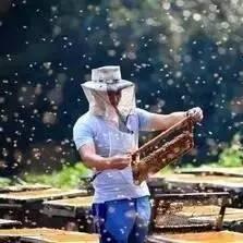 蜂蜜怎样美白 汪氏蜂蜜郑州 5+蜂蜜 早上吃蜂蜜 洋槐蜂蜜膏