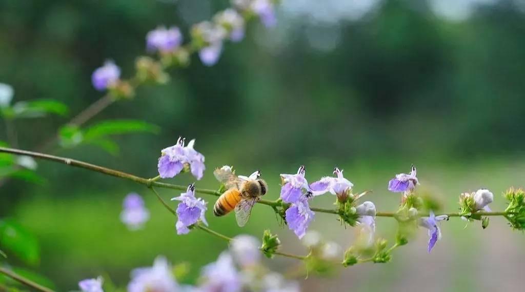 娃哈哈蜂蜜冰糖雪梨 早晨蜂蜜柠檬水 内分泌失调蜂蜜 蜂蜜鼻甲 党参蜂蜜孕妇能喝吗