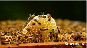 蜂蜜浅琥珀色 蜂蜜的功效与作用 早晨喝蜂蜜水好吗 蜂蜜祛痘方法 蜂蜜会不会长胖