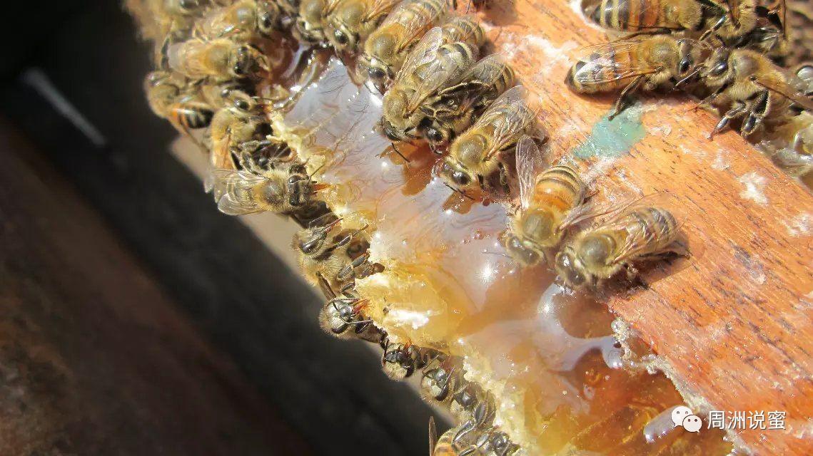 黑枸杞可以和蜂蜜 火葱加蜂蜜 蜂蜜能敷腿吗 蜂蜜放久了还能喝吗 山东蜂蜜