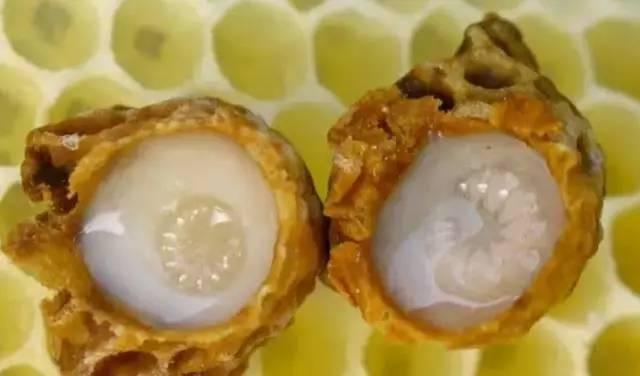 詹氏菊花蜂蜜 便秘什么时候喝蜂蜜好 怀田土蜂蜜 饭前喝蜂蜜 喝蜂蜜有助于顺产吗