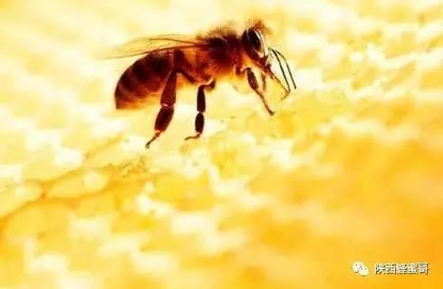 怀孕五个月可以喝洋槐蜂蜜吗 枇杷蜂蜜和柠檬能喝吗 每天蜂蜜 贵德蜂蜜 丽江假蜂蜜