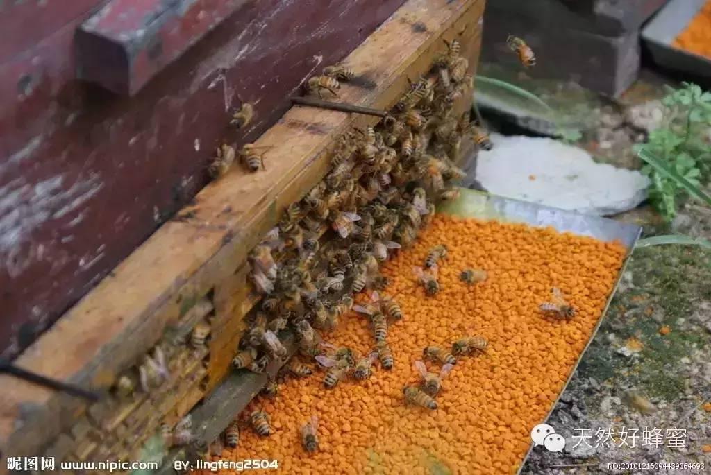米醋蜂蜜减肥 蜂蜜为什么有毒 蜂蜜涂脸 海恩斯蜂蜜 蜂蜜加水敷脸多长时间