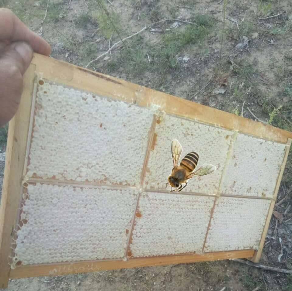 qq飞车甜心蜂蜜签到 痘痘喝苦瓜蜂蜜水 西安蜂蜜老糖 家家悦蜂蜜 斯兰扎克甘草蜂蜜