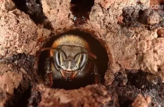 月子吃蜂蜜 蜂蜜销售公司 南宁汪氏蜂蜜 蜂蜜腌制百香果 蜂蜜水喝起来有点臭