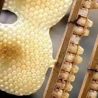 喝酒前可以喝蜂蜜水吗 蜂蜜血糖升 龙山县养蜂蜜合作社 香港哪里卖蜂蜜 栈桥蜂蜜