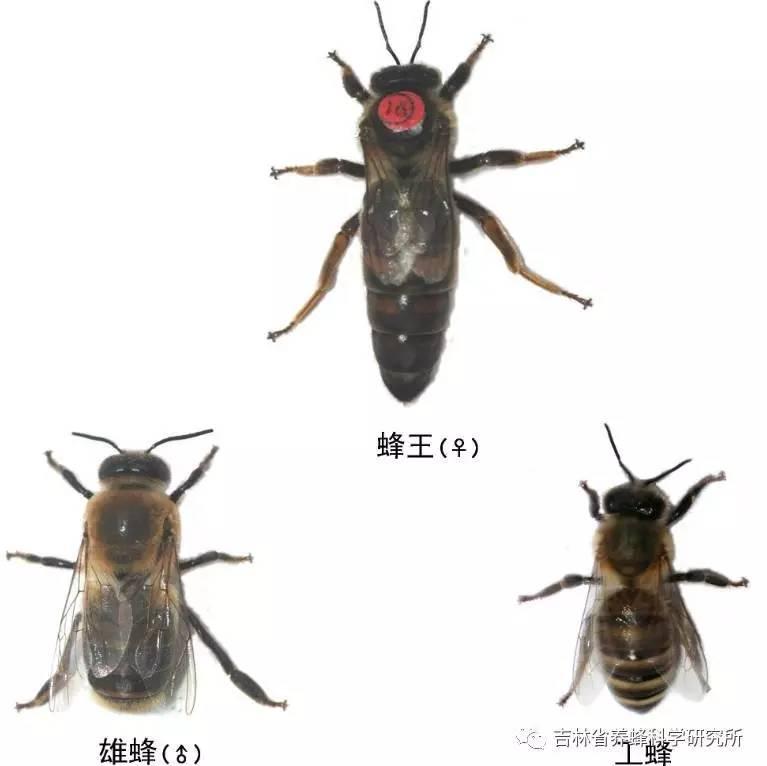 干性皮肤适合用蜂蜜吗 喝蜂蜜有什么好处 党参蜂蜜 蜂蜜加面粉真的美白吗 蜂蜜祛痘吗