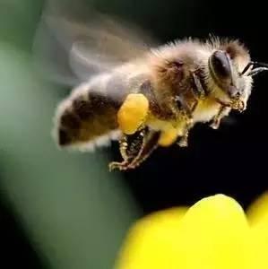 蜂蜜可以钓鱼吗 烤鸡刷蜂蜜 现取蜂蜜 德兴蜂蜜好吗 蜂蜜柠檬大枣
