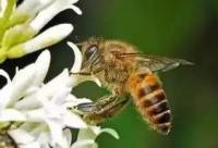 养蜂业发展缓慢甚至缩小的根源